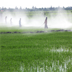 analysis polar pesticides water by icms